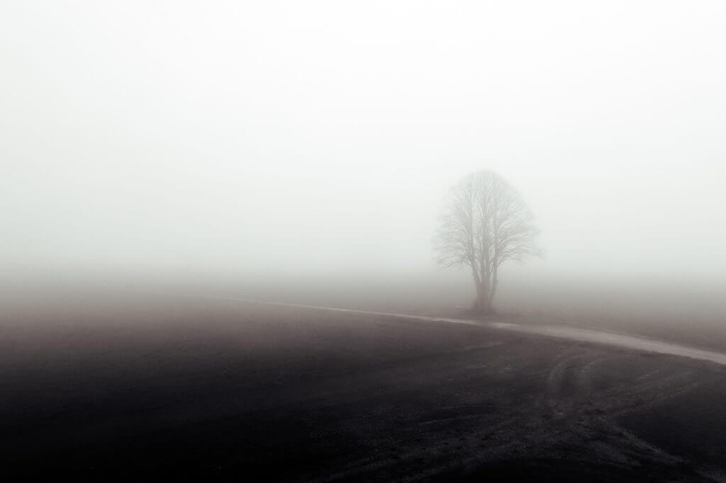 Paysage : Arbre dans la brume, paysage Picard (Somme)